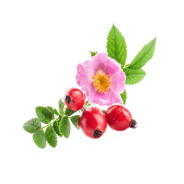 Propiedades cosmeticas del aceite de rosa mosqueta virgen ecologico