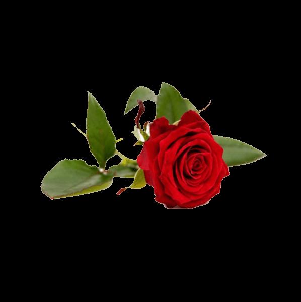 Propiedades cosmeticas del agua de rosas
