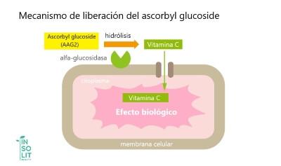 Mecanismo de acción del ascorbyl glucoside (AAG2)