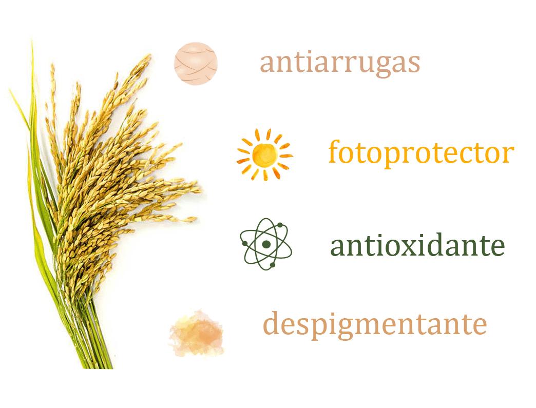 Propiedades y beneficios para la piel del acido ferulico