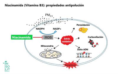 Propiedades antipolucion de la niacinamida en cosmeticos