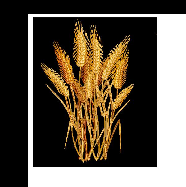 Propiedades y beneficios para la piel del acido hialuronico de origen vegetal