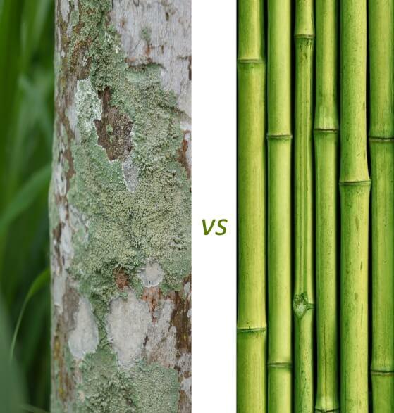 Propiedades antibacterianas del bambu