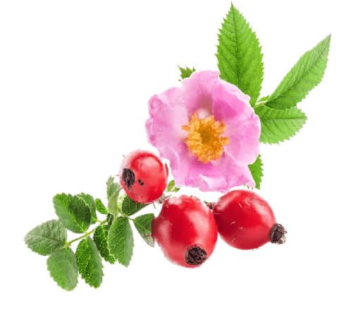 Aceite de rosa mosqueta virgen para tratar las estrias