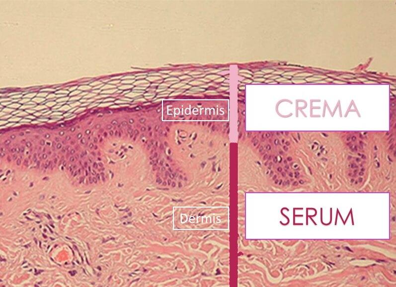 Efecto sobre la dermis de serum facial
