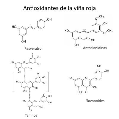 Antioxidantes de la hoja de viña roja