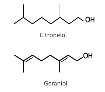 Composición aceite esencial de geranio